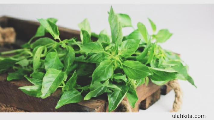 sayur lalapan bermanfaat bagi tubuh